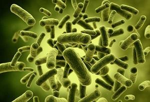 水质细菌检测